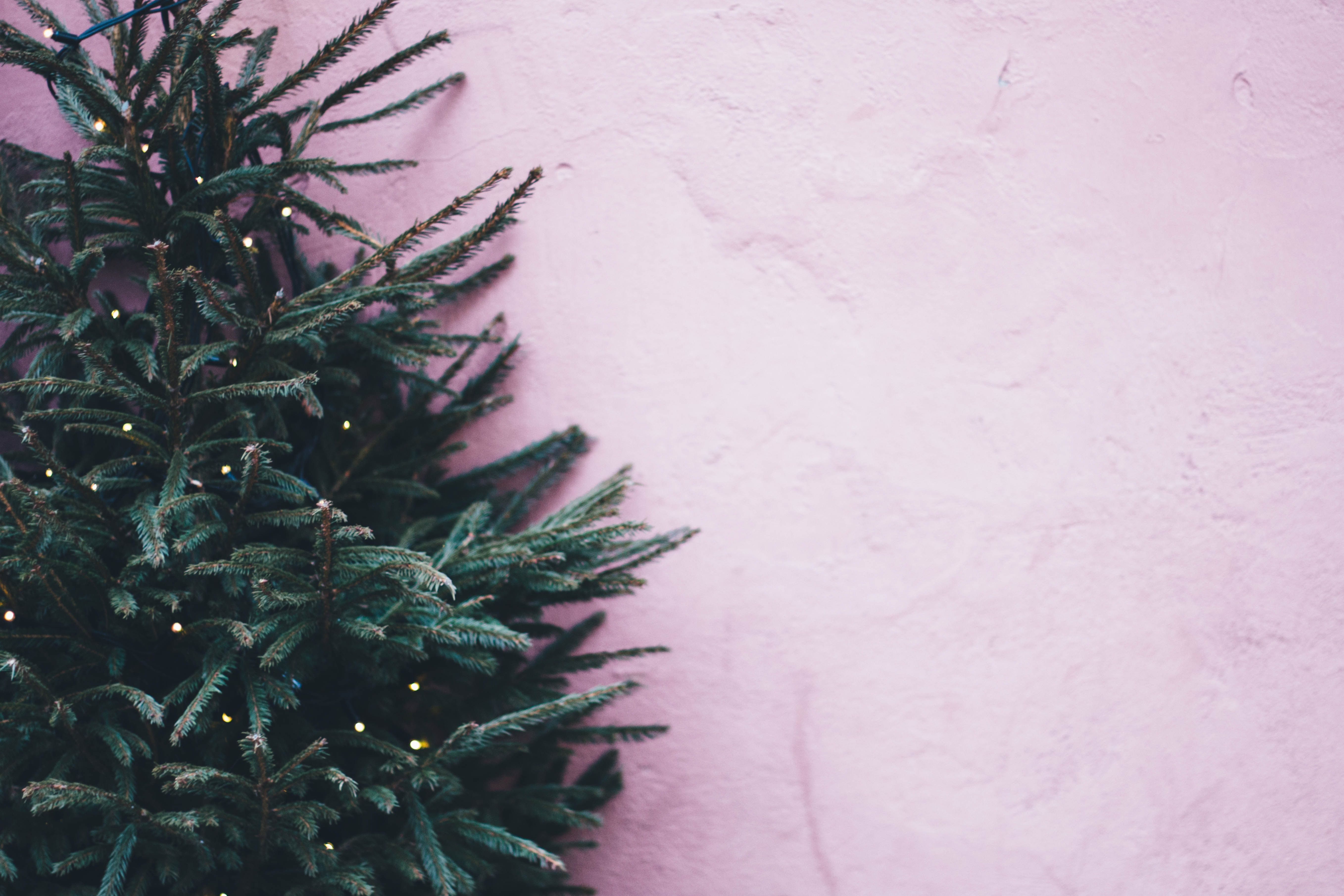 Christmas Tree glad to finally be free – DownTheTownNews